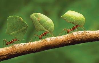 zt-ants-ifc_01