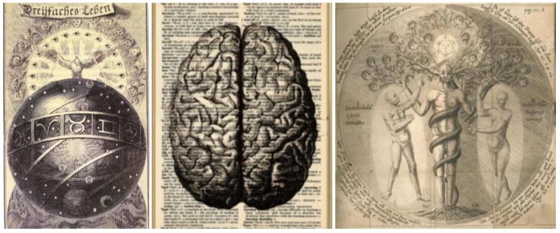 brain1-jpeg