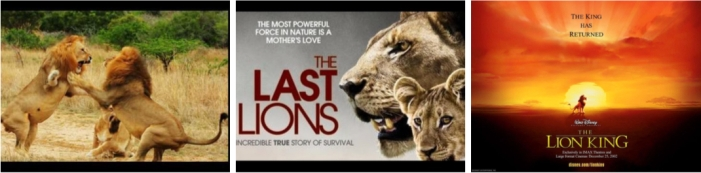 lions1-jpeg